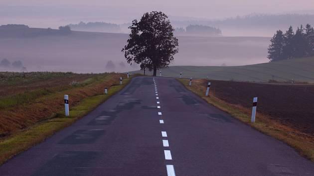 BEZ NÁZVU. Silnici s dominantním stromem vyfotil Jiří Lepš blízko Vranovské Vsi. Veřejnosti ji autor nabídl poprvé.