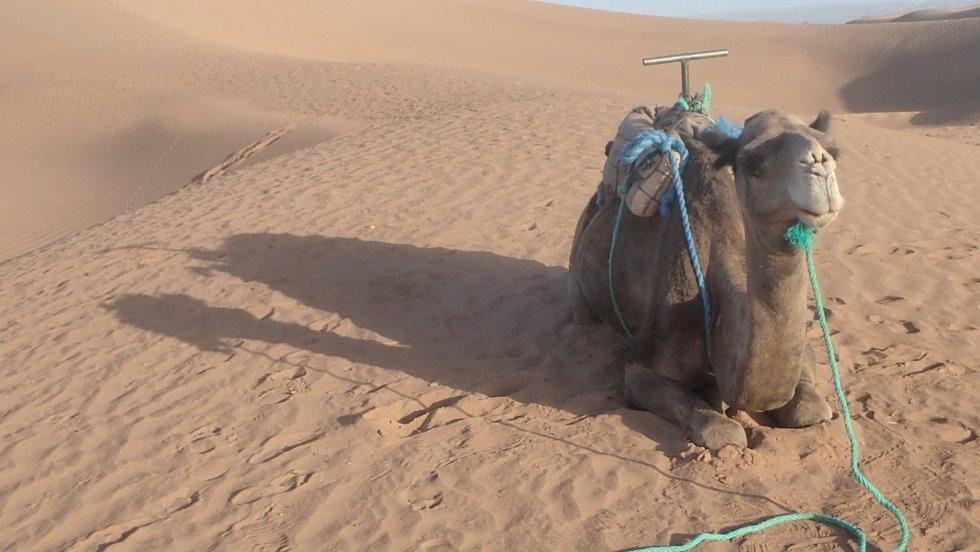 Třídenní pěší trek Saharou zůstává nezapomenutelným zážitkem.