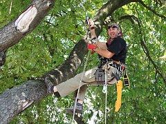 Práce ve výškách větví stromů, na čerstvém vzduchu, doma i v zahraničí. Antonínu Uhrovi učarovala arboristika.
