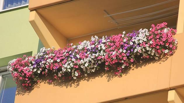 Nejlépe rozkvetlý balkon měla Adéla Scherrerová.