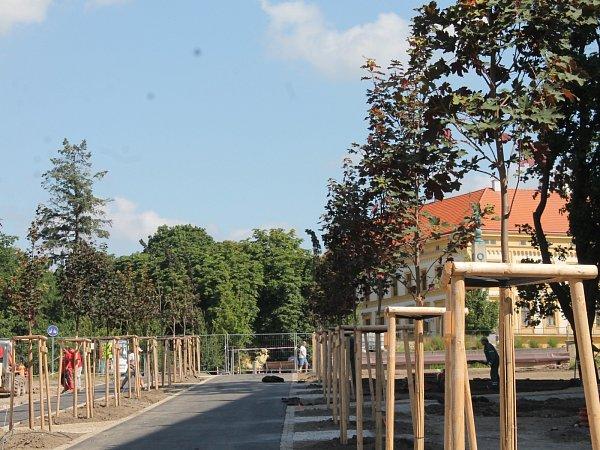 Znojemská radnice nechala vsobotu 6.července 2013vyměnit uschlé stromy ve střední části parku.