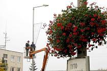 Díky mimořádně teplému počasí mohou nyní lidé vidět v ulicích jak vánoční výzdobu, tak stále i kvetoucí muškáty.