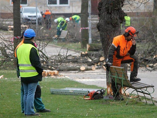 Kácením stromů v Dolním parku.
