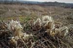 Na zahrádkách i v přírodě se už o slovo hlásí jaro.
