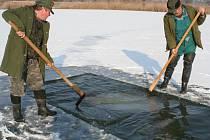 Rybáři v Jaroslavicích kontrolovali ryby, pod ledem