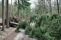 Škody způsobené vichřicí Emma v okolí Bítova