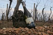 Nejlepší víno Znojemského koštu pochází z Lechovic