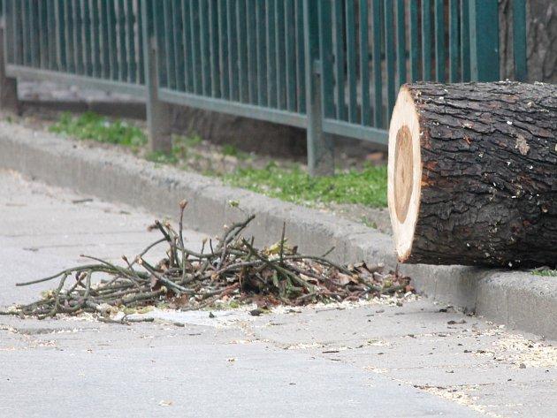 Kácení stromů ve znojemském Horním parku.