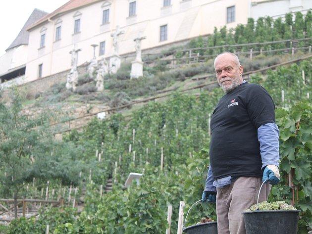 Historicky poprvé letos dozrála úroda na celé ploše znojemské městské Rajské vinice.