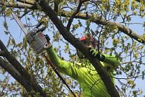 Stromolezci ve znojemském Městském lesíku.