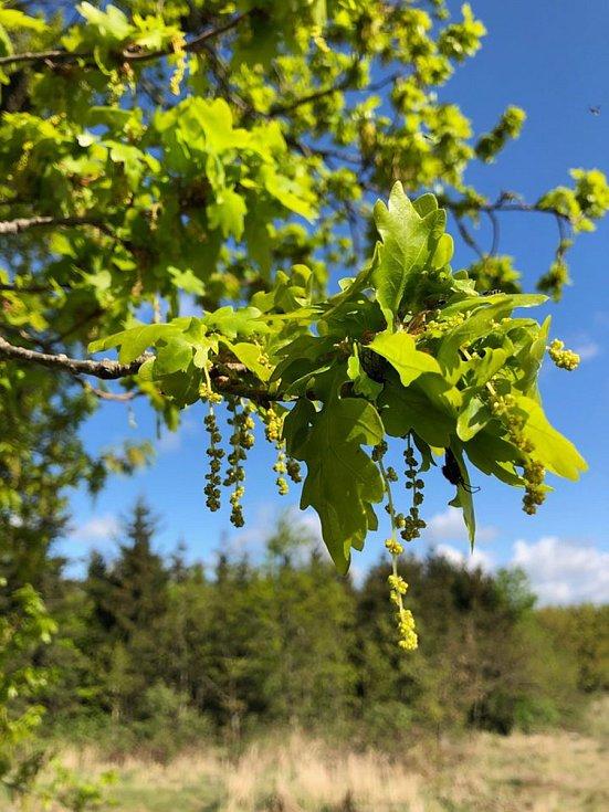 Jarní příroda láká k procházkám a výletům. Zašlete nám i vy vaše fotografie.