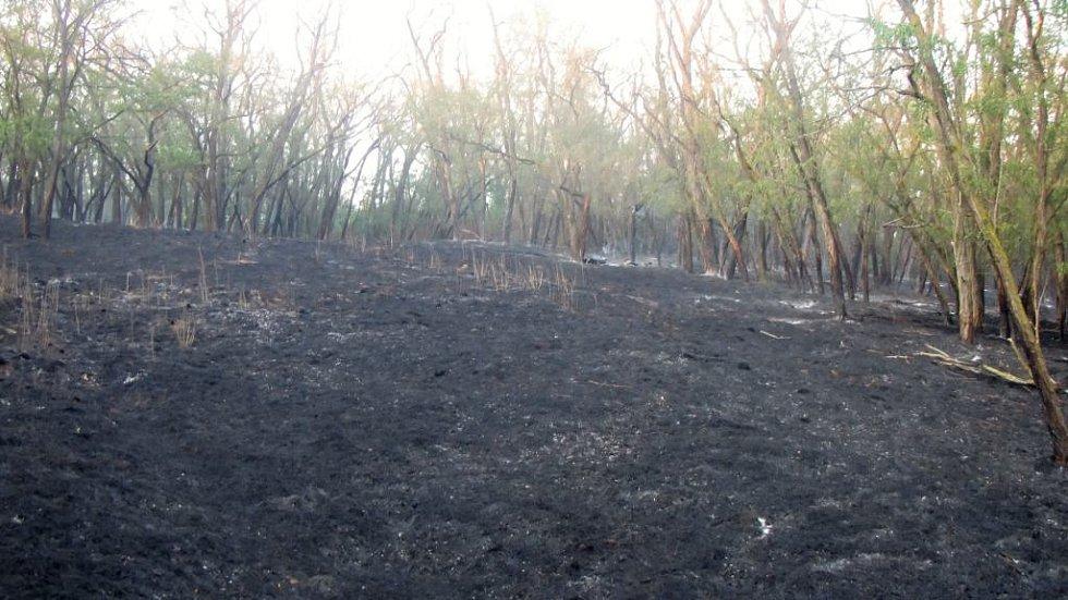Téměř dvě desítky hasičských jednotek v sobotu od půl páté odpoledne zasahovaly u požáru strniště, pole obilí a akátového remízku v Hostěradicích na Znojemsku. Hořelo na ploše dvacet hektarů.