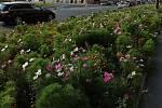 Květnaté louky zkoušejí už i v jiných městech.