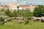 Kraví hora ve Znojmě. Ilustrační foto