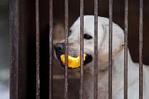Soukromý útulek pro psy ve Znojmě-Příměticích poskytuje aktuálně přístřeší čtyřem desítkám psů.