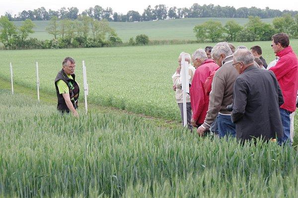 Petr Laml zbranišovické šlechtitelské stanice vypěstoval pšenici snázvem Cimrmanova ranná.