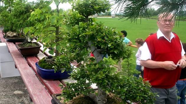 V Miroslavi byly k vidění bonsajové skvosty.
