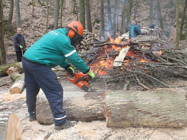 Pracovníci Městských lesů Znojmo likvidují popadané stromy v Gránickém údolí. Dřevo nabízí lesy k prodeji.