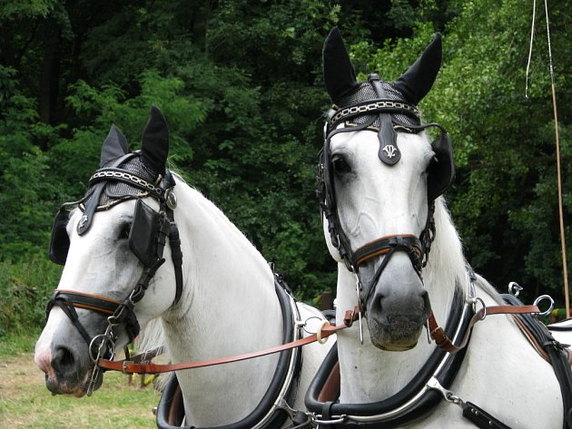 Do Krumlova se sjeli jezdci z celé republiky