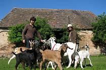 Petr Kosmák s manželkou chová kozy a ovce. Jeho stádo mohou lidé vidět na Kraví hoře u Znojma. Kosmák k farmaření utekl od exotických zvířat.