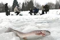 Zimní rybolov pstruhů na dírkách na rybníku v Boskovštejně.