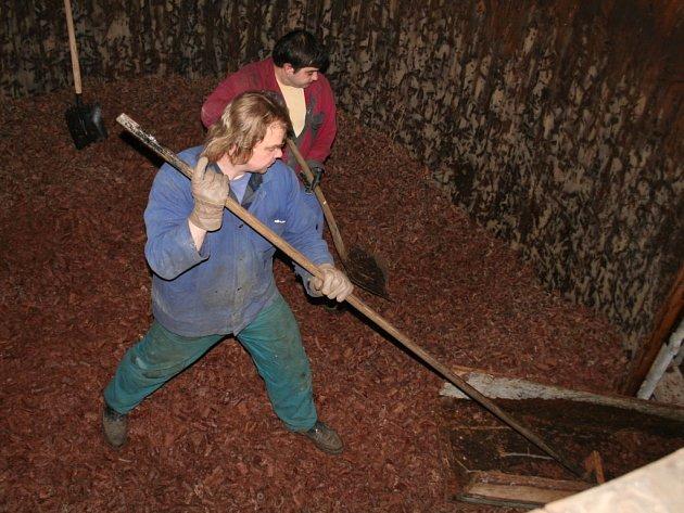 Vyvážení dubových hoblin z ocetnic ve zrušené znojemské octárně