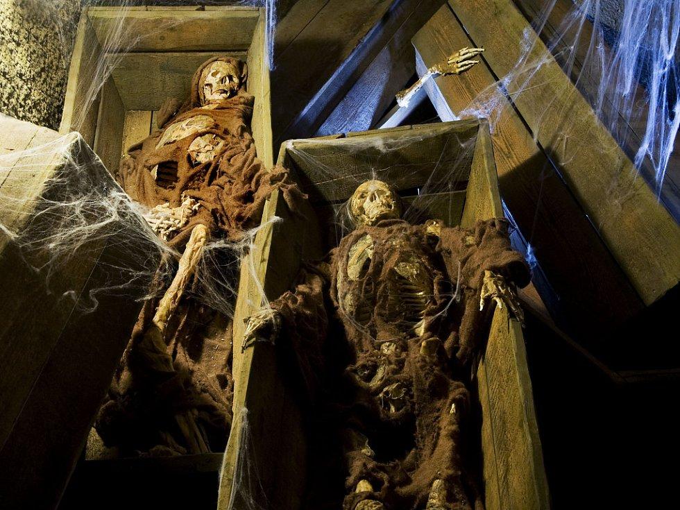 Tajemné bytosti ze znojemského podzemí