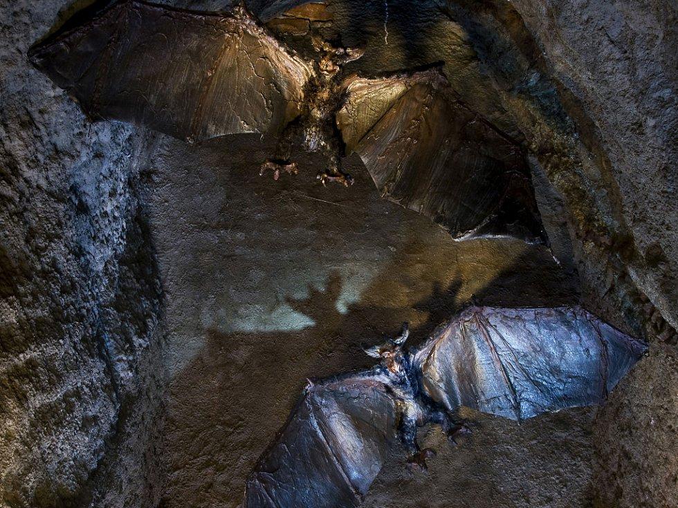 Tajmené bytosti ze znojemského podzemí