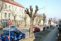 Prožezávání stromů v ulici Přímětická vyděsilo některé místní obyvatele.