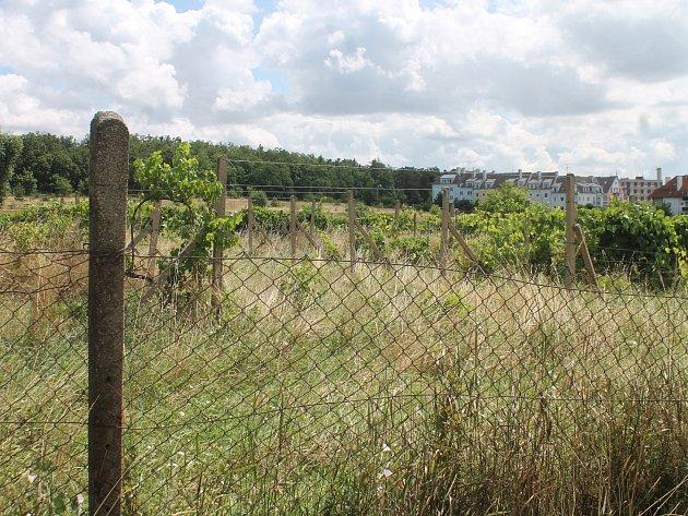 Areál s bývalými vinicemi mezi Městským lesíkem a silnicí na Přímětice nemůže Znojmo opakovaně prodat.