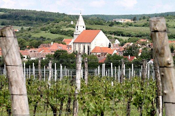 Silné úterní krupobití poškodilo vinice uHnanic a Šatova. Zasaženy byly silně ivinohrady Vinařství Kořínek, škody jsou podle Josefa Kořínka vážné.