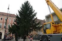 Na znojemské Masarykovo náměstí v pátek dopoledne dorazil vánoční strom. Sedmnáctimetrový smrk městu darovala Dlouhá Brtnice.
