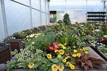 Truhlíky s květinami ze Znojma ozdobí centrum Vyškova.