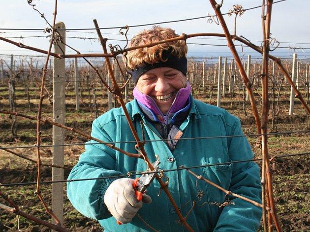 Zimní zastříhávání vinic