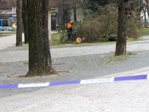 Motorové pily dělníků a kácení jednadvaceti stromů uzavřely ve středu Horní park ve Znojmě.