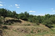 Přírodní památka Losolosy na Znojemsku.