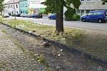 Odpadky hyzdí okolí znojemského nádraží.