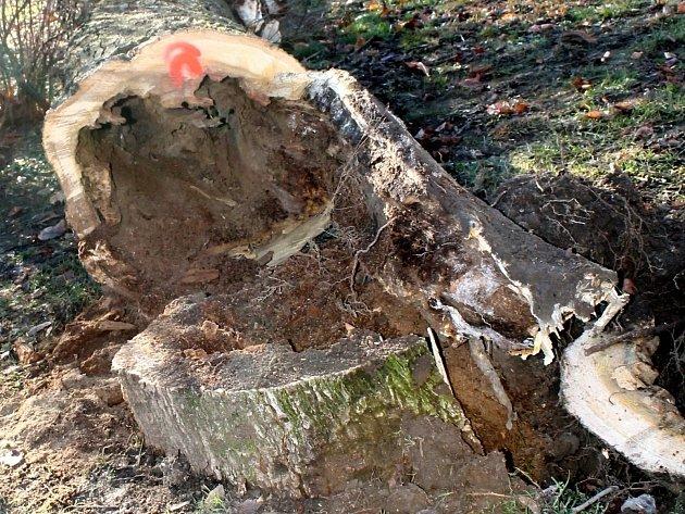 U poraženého stromu, ve kterém zimovali netopýři, se sešli odborníci z české inspekce životního prostředí.