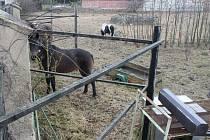 Policie prošetřuje úhyn několika koz v zooparku nedaleko hradu Bítov. Představitelé Ligy na ochranu zvířat podali trestní oznámení na neznámého pachatele pro podezření z týrání zvířat z nedbalosti.