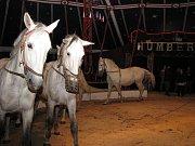 Cirkus Humberto ve Znojmě