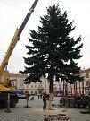 Dvanáctimetrový střibný smrk ze Slatiny stojí od čtvrtečního poledne na znojemském Horním náměstí. Nyní jej řemeslníci nazdobí a rozvěsí na něm šestatřicet tisíc světélek. Strom rozsvítí děti při zahájení adventu poslední den v listopadu.