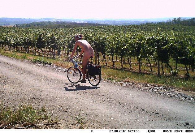 Nahého cykloturistu vyfotila fotopast ve vinicích společnosti Lahofer na Znojemsku.
