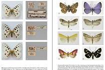 Přes dvě tisícovky druhů motýlů zapsali vědci do knihy Motýli Národních parků Podyjí a Thayatal, kterou nově vydala Správa parku.