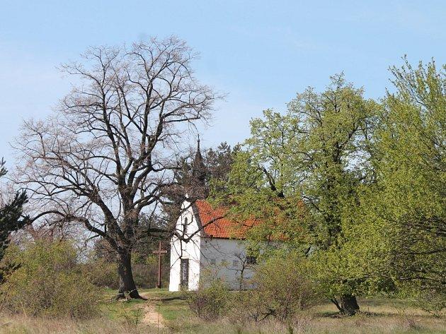 Nejvíce hlasů v anketě Strom Znojemska 2011 dostaly zhruba 120 let staré lípy u popické kaple.