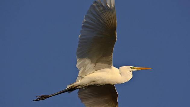 Fotografie od známého ornitologa