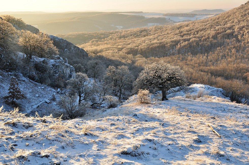 Pálava nad Soutěskou, na snímku kultovní dub pýřitý, zvaný šípák, který má ve znaku CHKO Pálava.