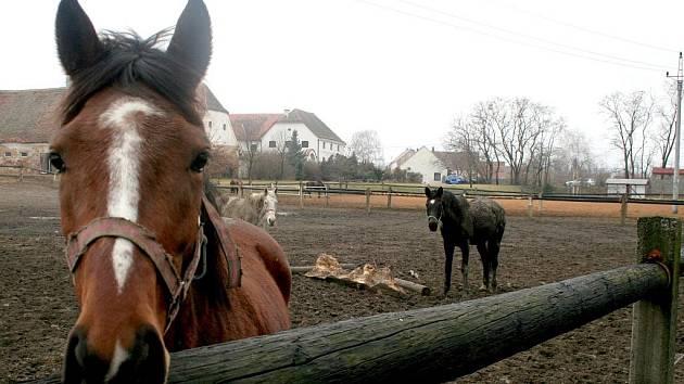 Koňská farma, ke které patří jedna ze zmiňovaných restaurací, je již léta dalším zapamatovatelným lákadlem Lechovic.