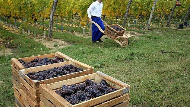 BEZ POČÍTAČE. Vinaři z Vinařství rodiny Špalkovy sice vyráběli víno  jako v roce 1884, sami se už ale bez počítače neobejdou.