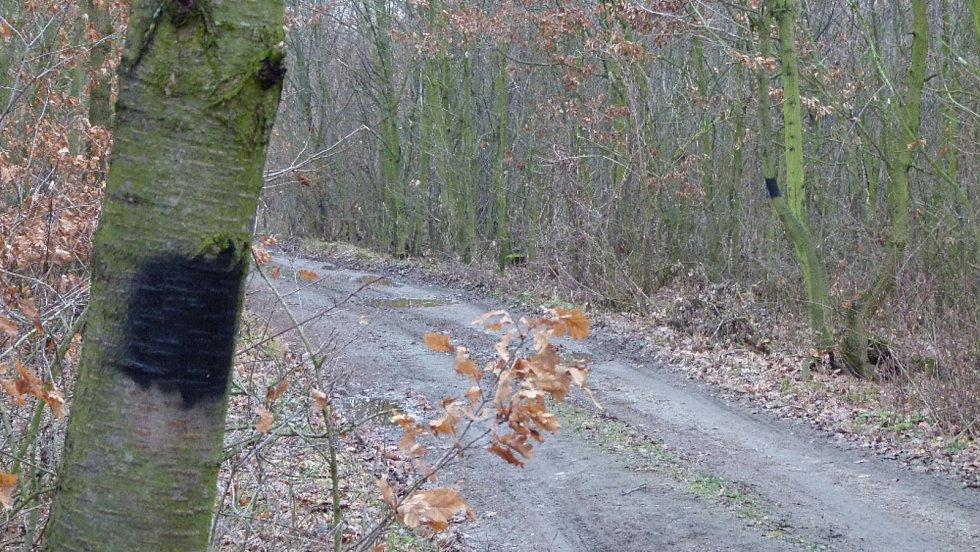 Trasu z Miroslavských Knínic do Moravského Krumlova označili nadšenci z miroslavského spolku Mirosa. Vandal část značek zničil.