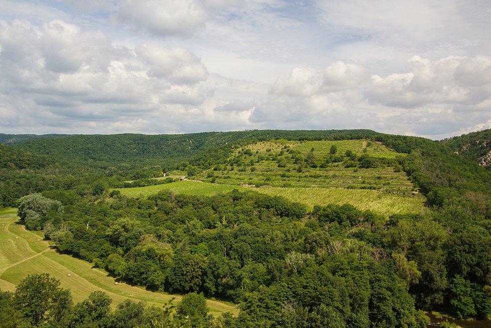 Vinice Šobes v Národním parku Podyjí, která patří společnosti Znovín Znojmo.